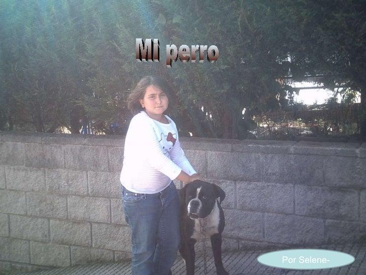 Por Selene- Mi perro