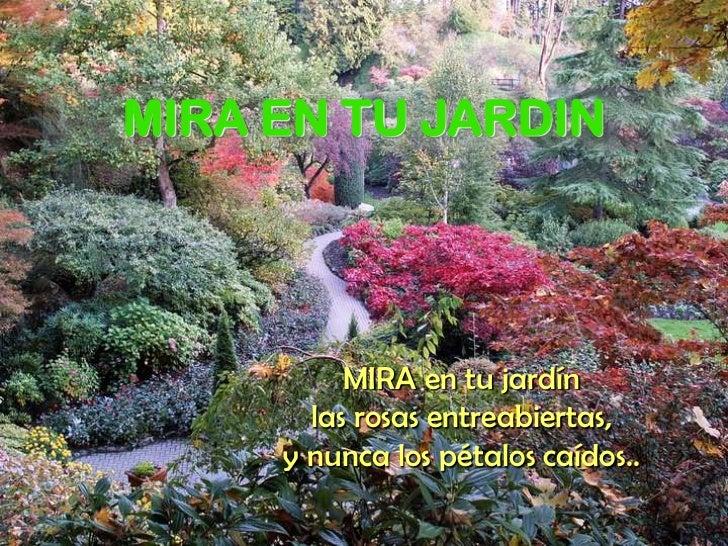 MIRA EN TU JARDIN<br />MIRA en tu jardín <br />las rosas entreabiertas, <br />y nunca los pétalos caídos..<br />