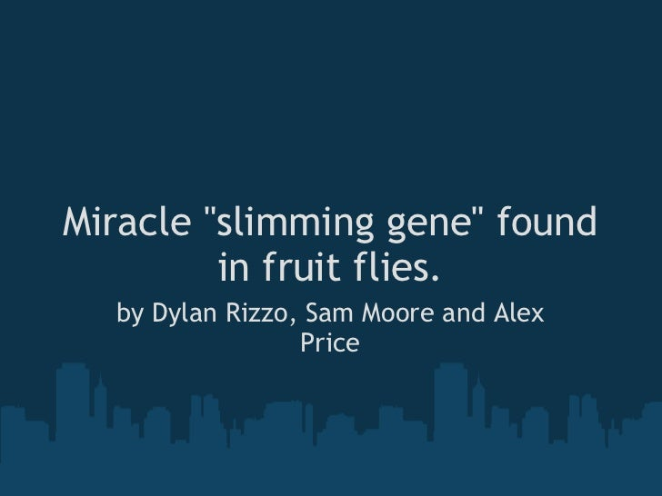 "Miracle ""slimming gene"" found in fruit flies. by Dylan Rizzo, Sam Moore and Alex Price"