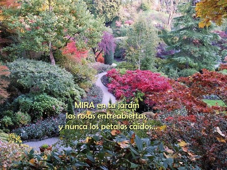 MIRA en tu jardín  las rosas entreabiertas,  y nunca los pétalos caídos...