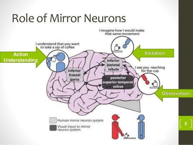 Mirror Neuron System In Neuro Rehabilitation