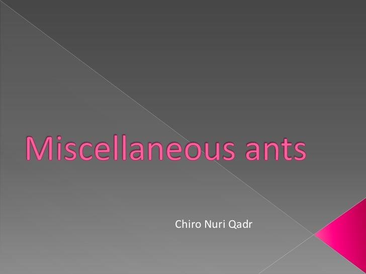 Miscellaneous ants