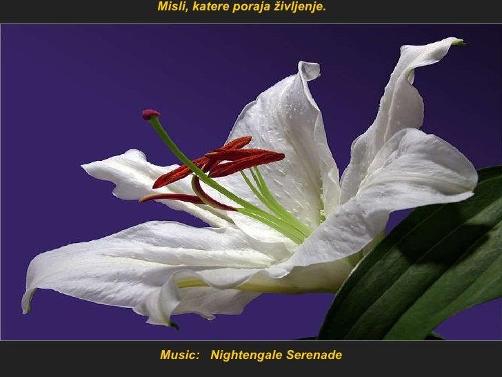 Music:  Nightengale Serenade Misli, katere poraja življenje.