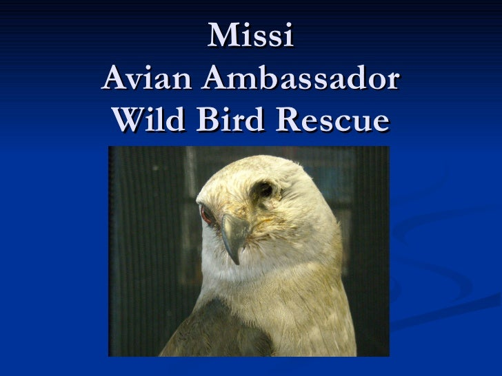 Missi Avian Ambassador Wild Bird Rescue