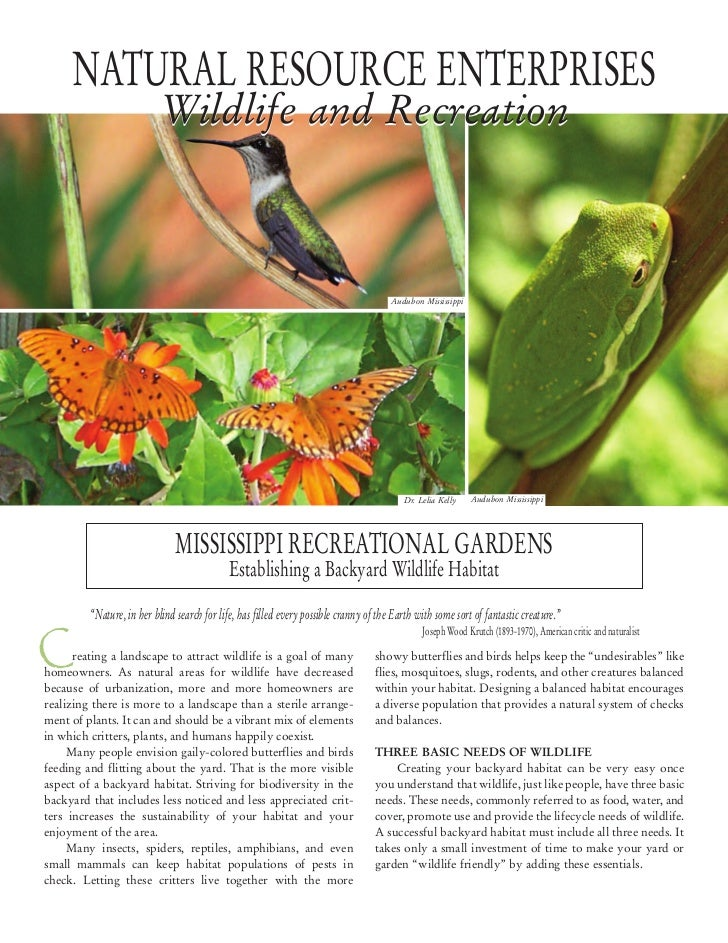 Mississippi establishing a backyard wildlife habitat