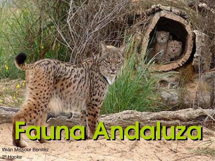Fauna Andaluza 2ª Hooke Imán Missour Benitez