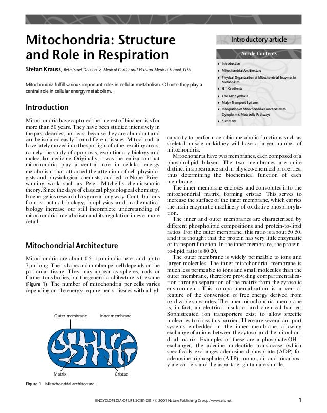 Mitochondria: Structure and Role in Respiration Stefan Krauss, Beth Israel Deaconess Medical Center and Harvard Medical Sc...