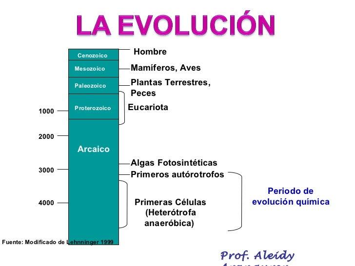 Evolucion Quimica y Celular Evolución Química Hombre