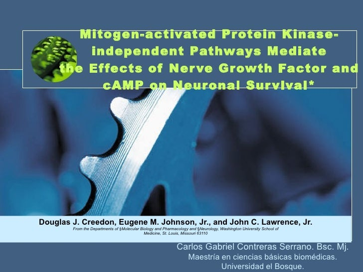 Mitogen-activated Protein Kinase-independent Pathways Mediate the Effects of Nerve Growth Factor and cAMP on Neuronal Surv...