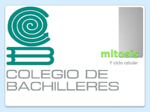 mitosis Y ciclo celular
