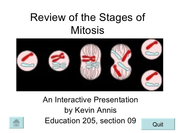 Review of the Stages of Mitosis An Interactive Presentation by Kevin Annis Education 205, section 09 Quit