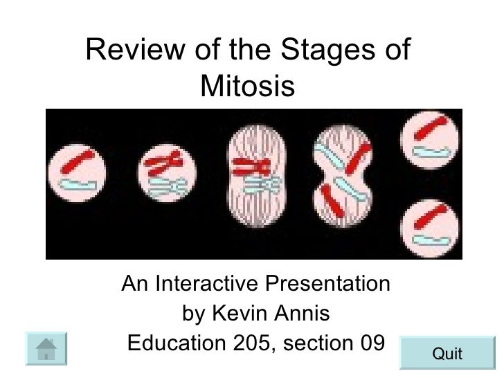 Mitosis Ppt