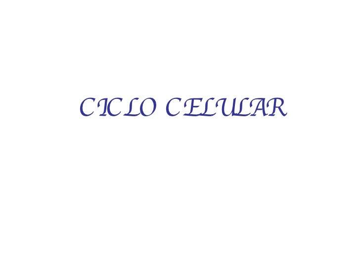 <ul><li>CICLO CELULAR </li></ul>