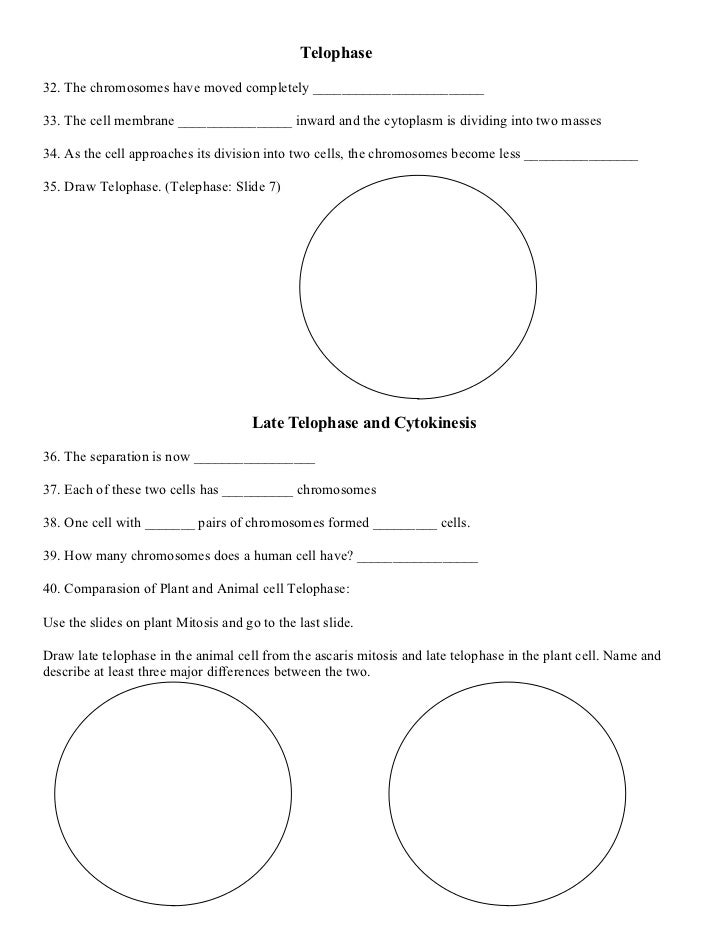 Mitosis activity worksheet