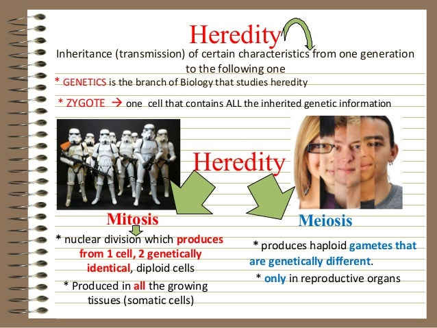 HeredityInheritance (transmission) of certain characteristics from one generation                             to the follo...