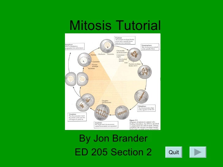 Mitosis Tutorial By Jon Brander ED 205 Section 2 Quit