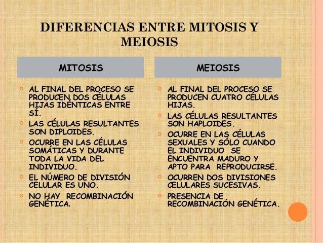 Mitosis y meiosis for Diferencia entre yeso y escayola