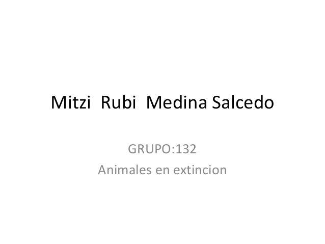 Mitzi Rubi Medina Salcedo GRUPO:132 Animales en extincion