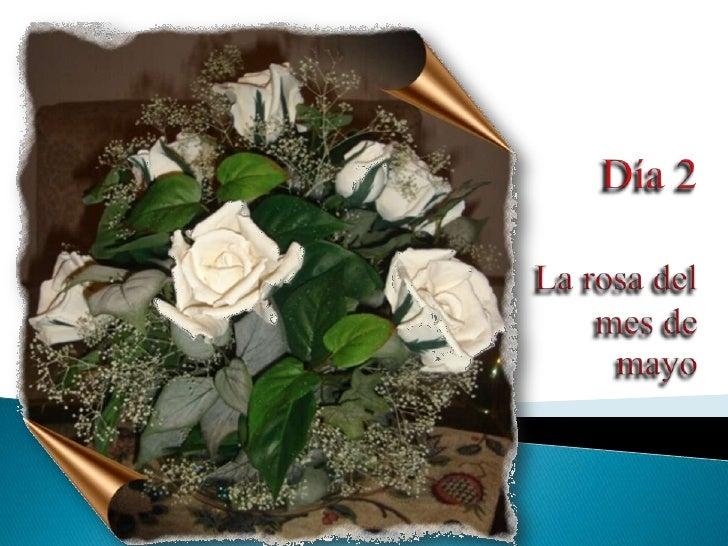 Mm2 Rosade Mayo