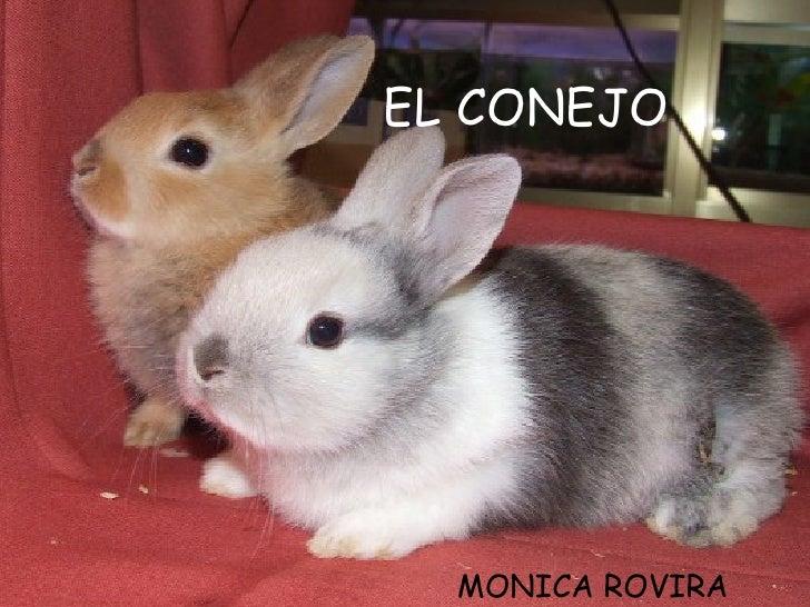 EL CONEJO MONICA ROVIRA