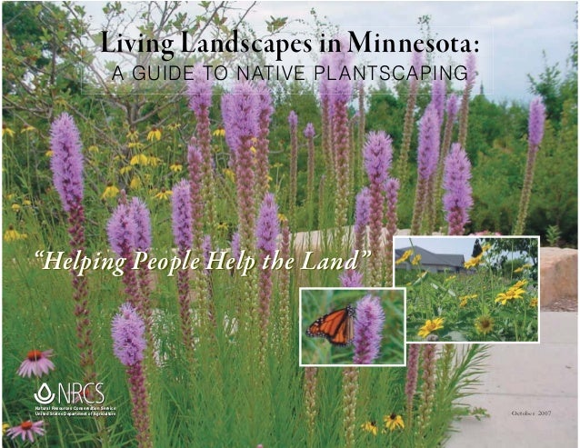 "Living Landscapes in Minnesota:                                    A GUIDE TO NATIVE PL ANTSCAPING""Helping People Help the..."