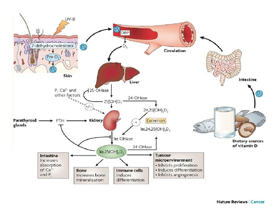 Module 4. Carences nutritives : Le fer et la vitamine D