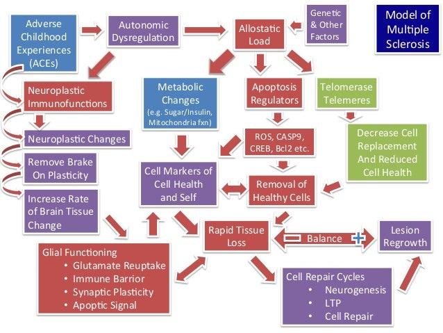 Adverse   Childhood   Experiences   (ACEs)   Autonomic     Dysregula1on   Allosta1c     Load   Telomer...