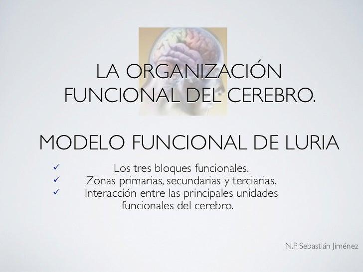 LA ORGANIZACIÓN      FUNCIONAL DEL CEREBRO.  MODELO FUNCIONAL DE LURIA            Los tres bloques funcionales.       Zo...