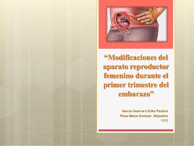 """""""Modificaciones delaparato reproductorfemenino durante elprimer trimestre del    embarazo""""      García Guerrero Erika Paul..."""