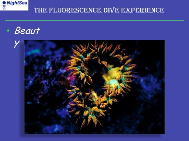 The Fluorescence Dive Experience• Beaut y