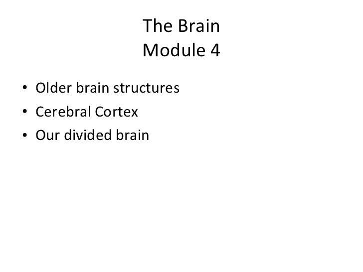 The Brain Module 4 <ul><li>Older brain structures </li></ul><ul><li>Cerebral Cortex </li></ul><ul><li>Our divided brain </...