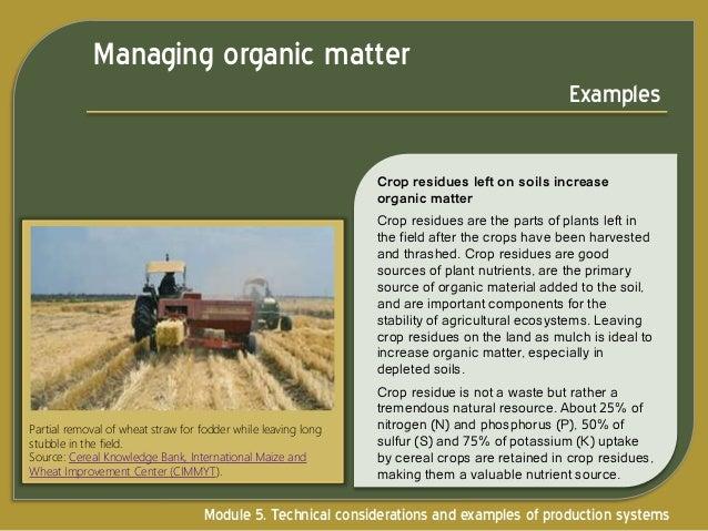 Example Organic Organic Matter Examples
