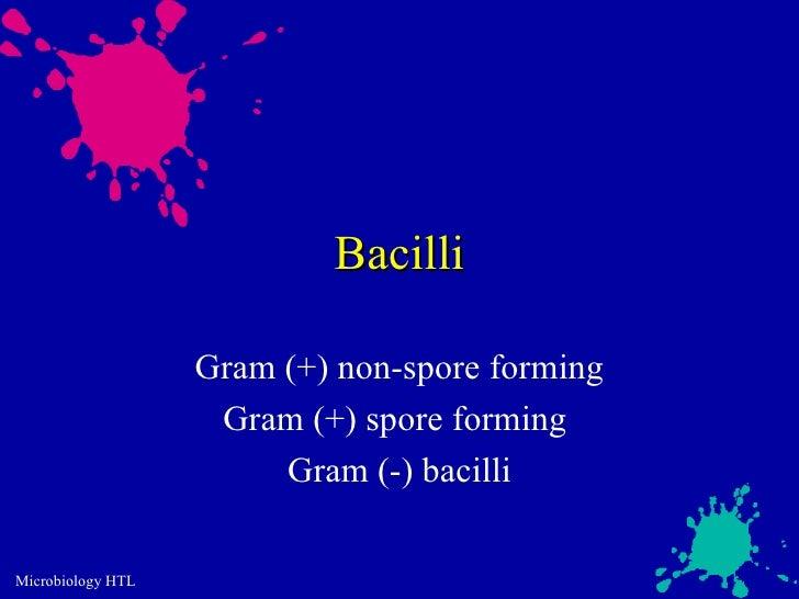 Bacilli                   Gram (+) non-spore forming                    Gram (+) spore forming                        Gram...