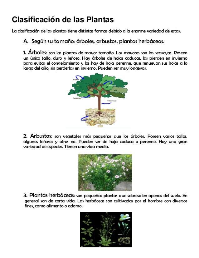 Modulo 11 partes de la planta for Clasificacion de las plantas ornamentales