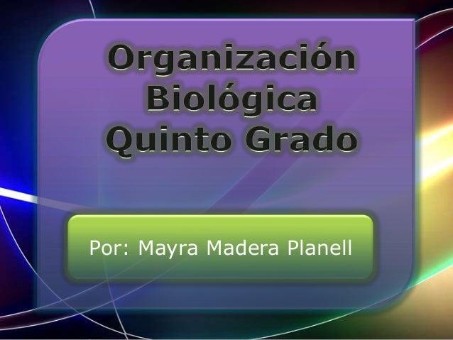 Por: Mayra Madera Planell