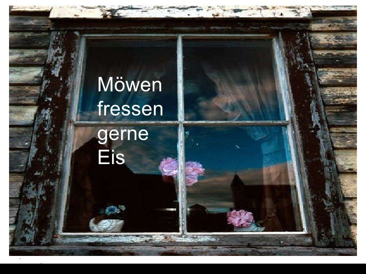 Moewen_und_Eis