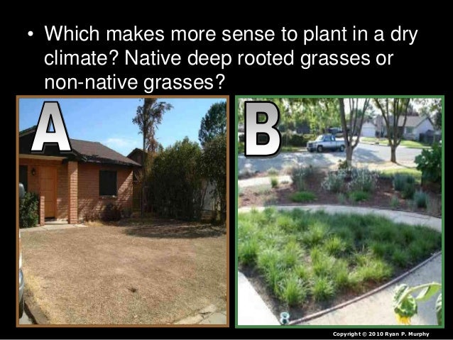 • Which makes more sense to plant in a dry climate? Native deep rooted grasses or non-native grasses? Copyright © 2010 Rya...