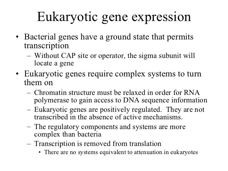 Eukaryotic gene expression <ul><li>Bacterial genes have a ground state that permits transcription </li></ul><ul><ul><li>Wi...