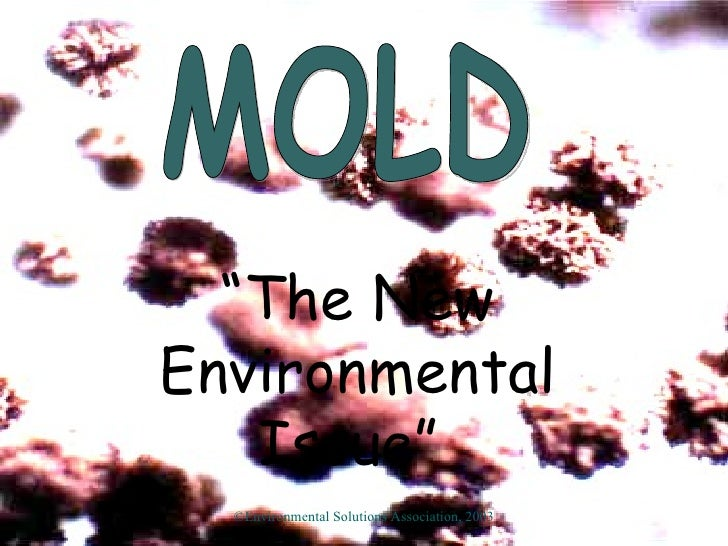 "MOLD "" The New Environmental Issue""   ©Environmental Solutions Association, 2003"