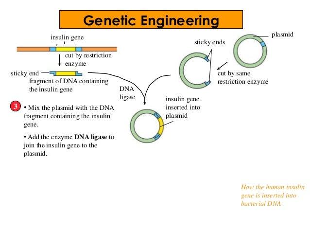 restriction enzyme worksheet Termolak – Enzymes Worksheet