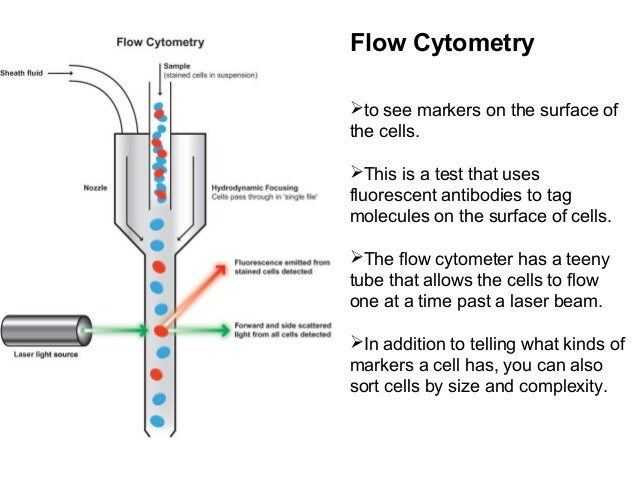flow cytometry essay