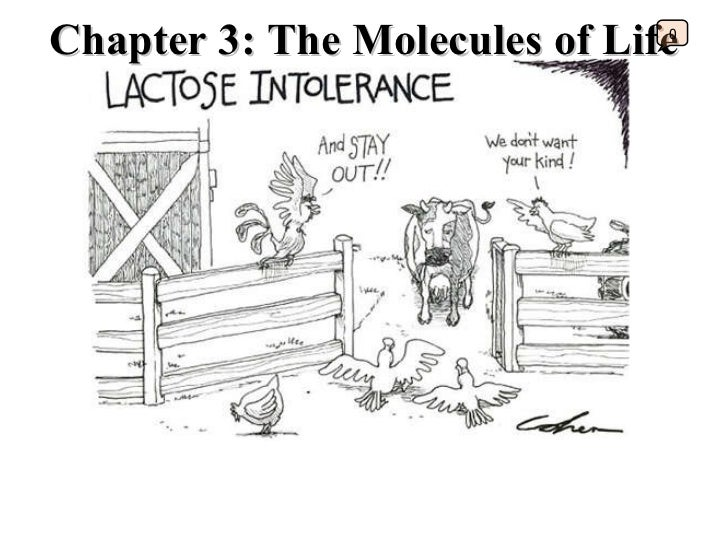 Chapter 3: The Molecules of Life 0