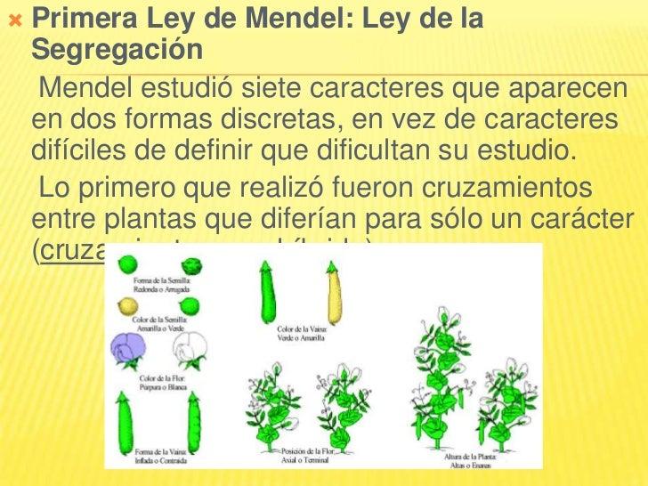    Primera Ley de Mendel: Ley de la    Segregación     Mendel estudió siete caracteres que aparecen    en dos formas disc...