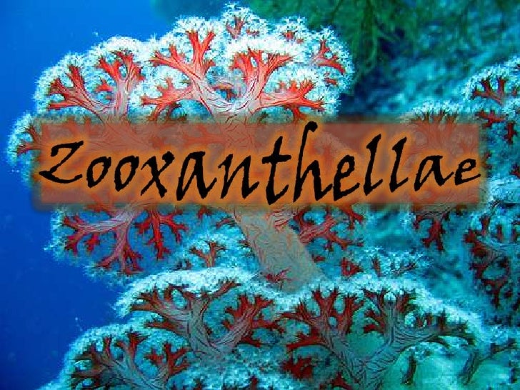 What are zooxanthellae?Zooxanthellae