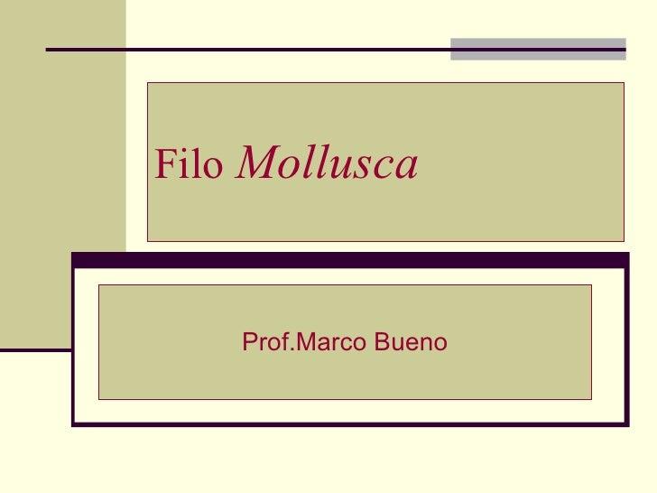 Filo  Mollusca Prof.Marco Bueno