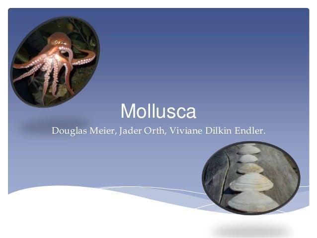 Mollusca - Biologia