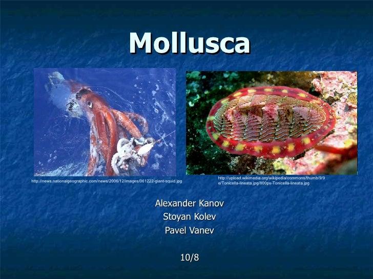 Mollusca Alexander Kanov Stoyan Kolev Pavel Vanev 10/8 http://news.nationalgeographic.com/news/2006/12/images/061222-giant...