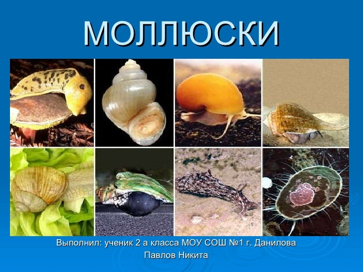 Molluski