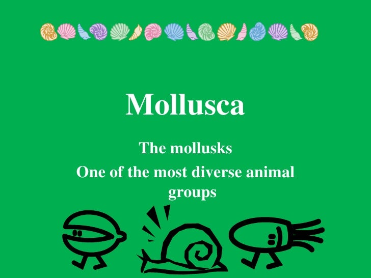 Mollusca         The mollusksOne of the most diverse animal             groups