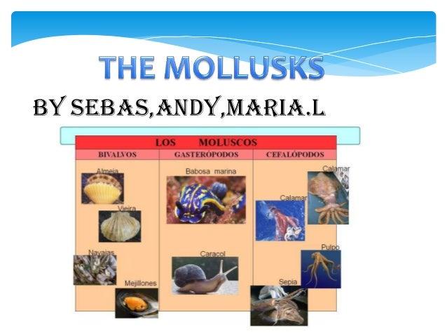 By SEBAS,ANDY,MARIA.L